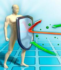 Кордицепс регулирует иммунитет